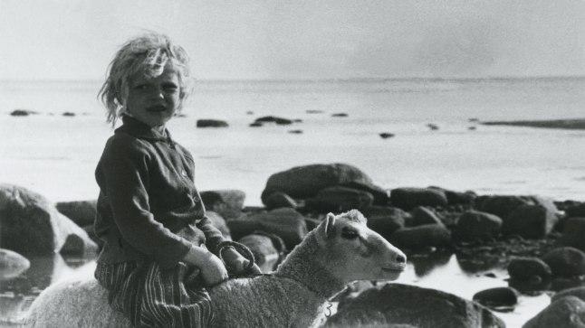 """KIHNU STAAR: Umbes kuueaastane Merle ratsutas 1973. aastal valminud Mark Soosaare filmis """"Kihnu naine"""" lammastega."""