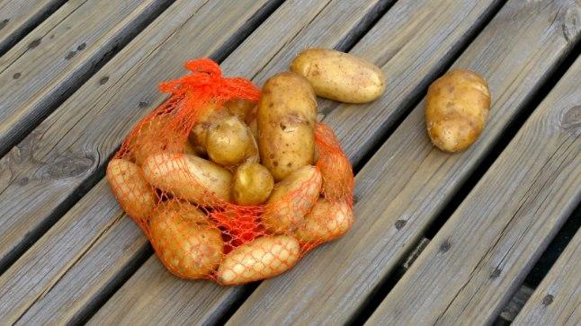 Kartul las olla ikka kollane: roheliseks läinud kartuleid süüa ei tohiks