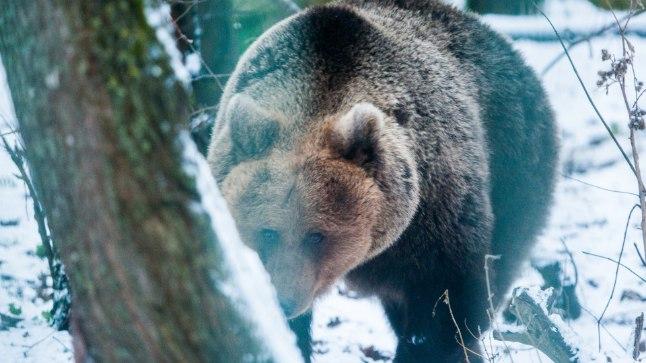 Karu Karoliina Elistvere loomapargis