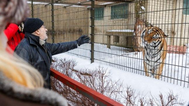 Tiigriorg Heategevuslik perepäev tiigrile uue kodu rajamiseks Tallinna Loomaaias.