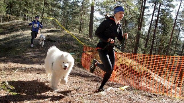 Koertekrossil jooksevad koerad koos omanikega.