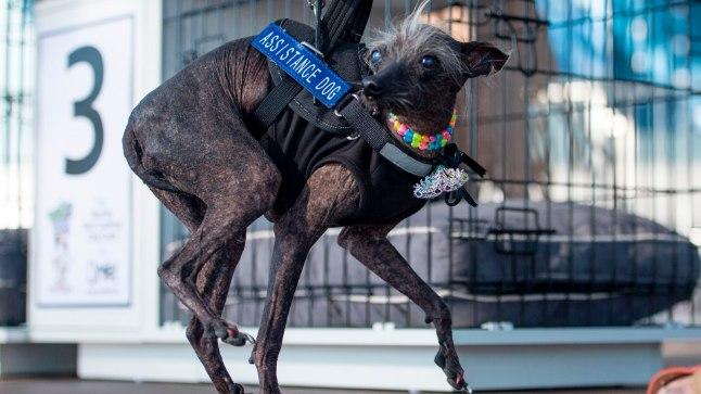 15-летний беззубый пес по кличке Чейз