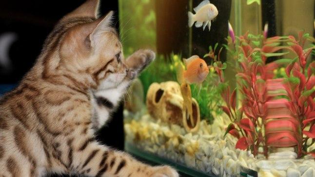 Akvaariumikalad võivad end kassi suhtes üsna turvaliselt tunda, aga kui selle temperatuuri juhitakse internetti ühendatud termostaadi kaudu, siis on kogu majapidamise või ettevõtte sisevõrk häkkeritele kerge saak.