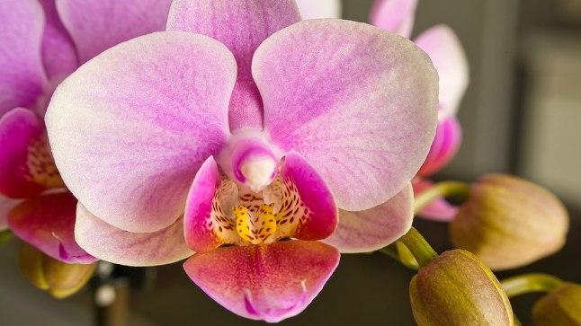 Head nipid orhidee valikuks!