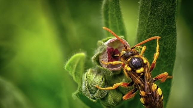 Mida teha putukahammustuse korral?