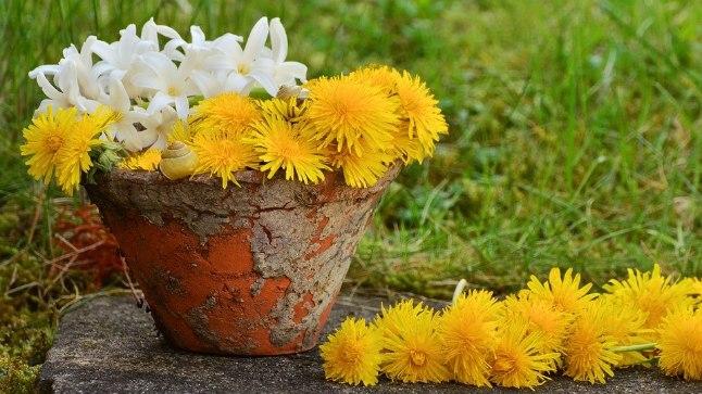 Head nipid puhta lillepoti jaoks!