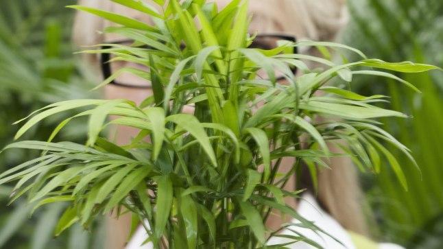 Ära kiusa inimest... ega taime!