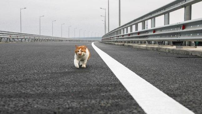 Kass Mostik sillal jalutamas