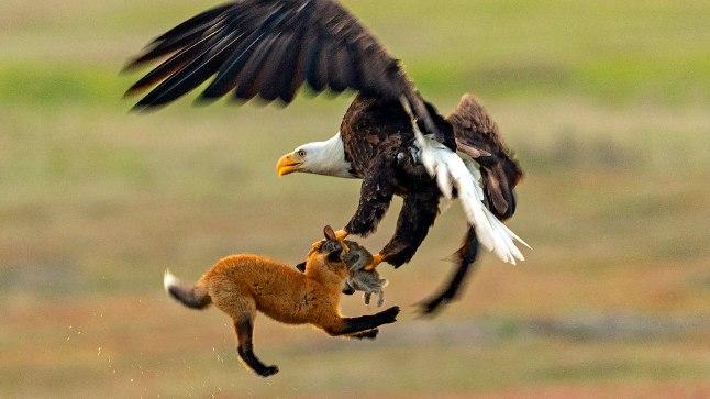Dramaatiline võitlus õhus