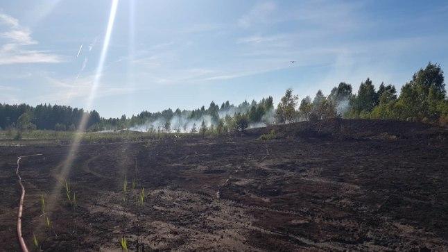 RASKE KUSTUTADA: Turbaväljapõlengu kustutamine Konju külas suhteliselt väiksel alal võttis kaks päeva ja kulutas päästjate ressurssi.