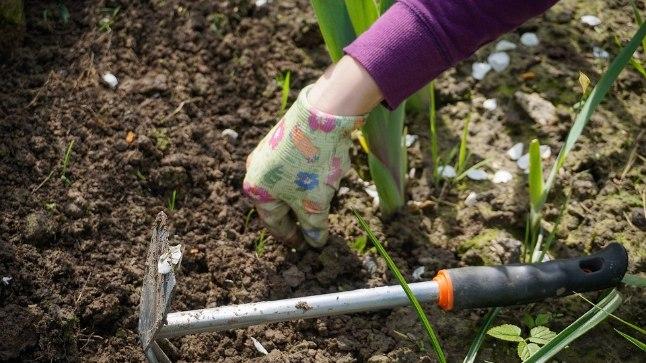 Ära unusta midagi olulist aias tegemata.