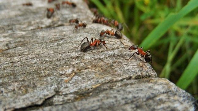 Võitle tüütute sipelgatega!