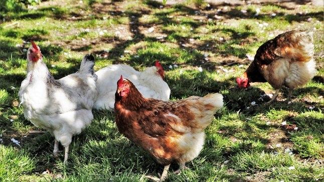 Kanu saab ainult suveks ka rentida!