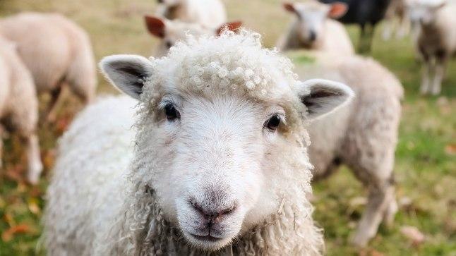Lammastest on suur rõõm!