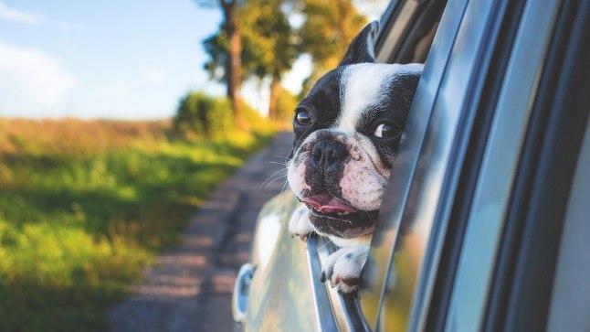 Lemmik vajab autosõidul sinu tähelepanu!