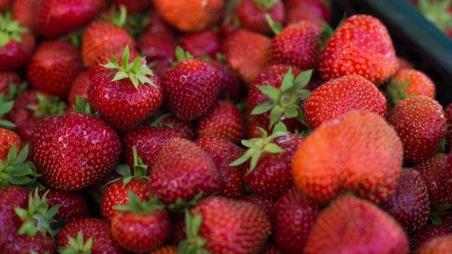 Aedmaasikas avab suvise marjahooaja