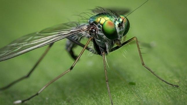 Putukate hammustused on väga tüütud.