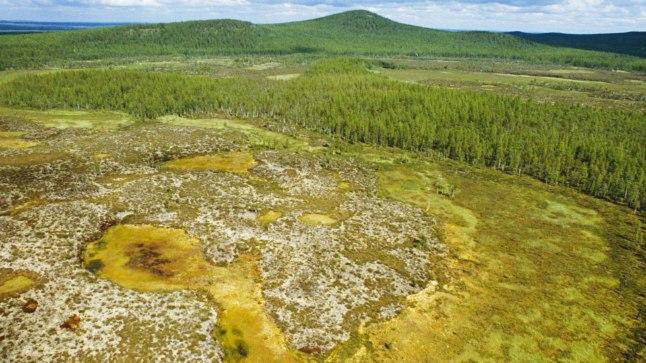 KATASTROOFIPAIK: Praeguseks katab Siberis asuvat Tunguusi katastroofi paika uus noor mets. Pilt on tehtud 2008. aastal.