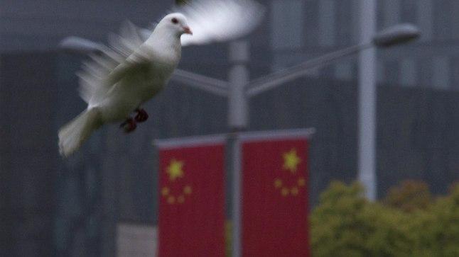 Tuvi või jälgimisdroon? Sel pildil on siiski pärislind Hiinas Shanghai provintsis.