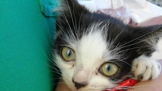 VÄRISES JA OLI LIGANE: Klosetipoti kõrvalt leitud kass tundis inimeste vastu hirmu.