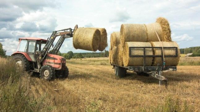 PÕHUGA RAHULIK: Parasjagu põhurulle tõstev Iisaku talunik Heiki ütleb, et põhuga vargahirmu ei ole, aga kaksi heinarulli mahub sõiduauto järelkärule paraku ära.