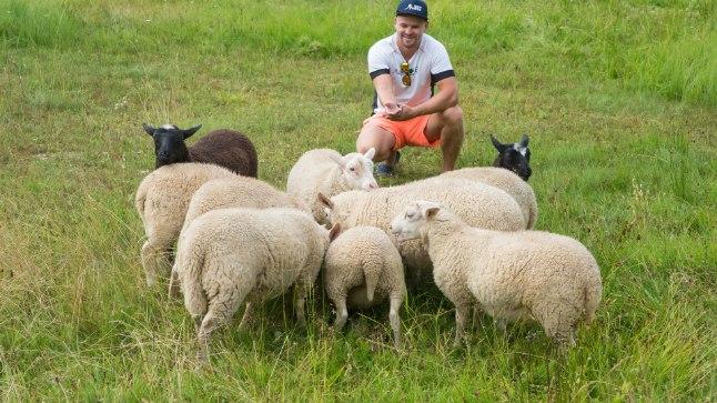 LOODUSLIKUD NIIDUKID: Veemäe talu peremees Anti Saarepuu naudib tänavu hoovi hooldamisel 12 lamba abi.