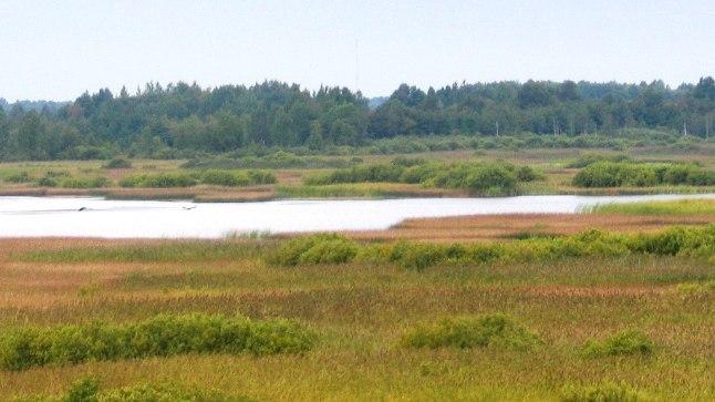 Selline oli Koigi järv enne kuivamist.