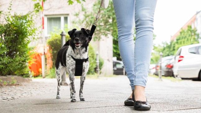 Koer annab põhjust õue minna ja end liigutada isegi siis, kui sul selleks vähimatki isu pole.