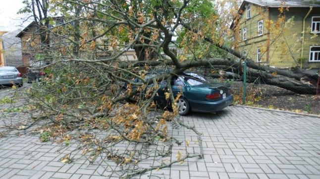 Ilmateenistus hoiatab: Eestit räsib lähipäevil tormituul,  laevareisijaid ootab ees korralik kõikumine