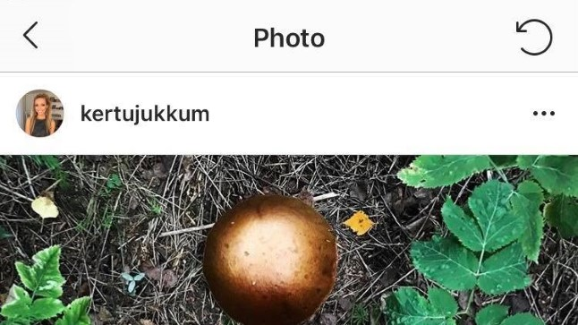 Kerttu Jukkumi seenekorv