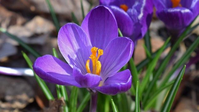 Et aed kevadel õitseks