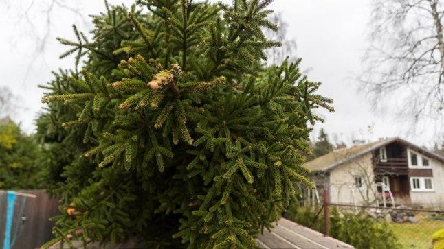 Tallinn palub jõulukuused konteineritesse koguda