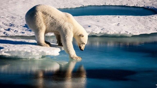 Kümned näljased jääkarud vallutasid Venemaa külakese