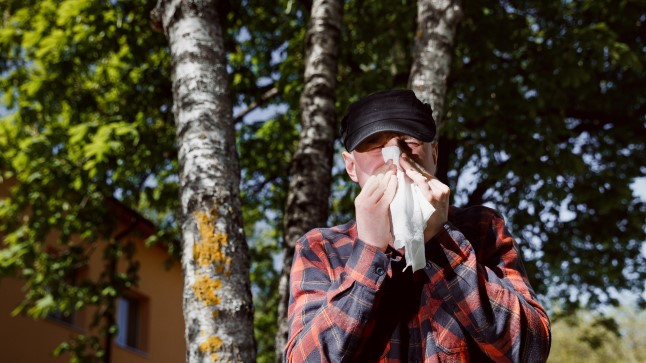 Allergikud kimbatuses: nädalavahetustel ei uuendata õietolmukaart