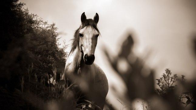 USKUMATU TRAGÖÖDIA: hobuse kabjalöök surmas lapse