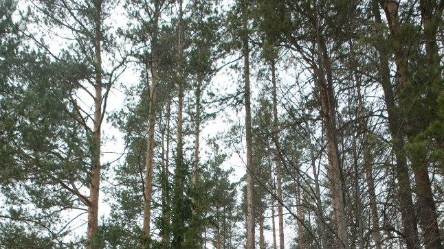 Riigikogulased paluvad metsavendluse uurimiseks ministrilt abi
