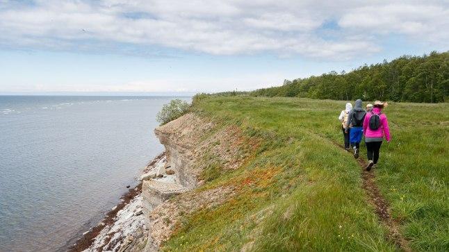 Tallinna külje all Pakri poolsaarel saab piki rannikut katkestamata jalutada mitukümmend kilomeetrit järjest.