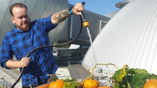 Ahhaa katusel kasvatatud kõrvitsaid analüüsib maaülikooli laboris Ahhaa programmijuht Elmar Reinhold.