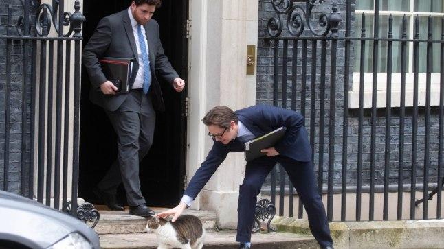 FOTOD | SUUR POLIITJUUBEL! Suurbritannia tähtsaim kass tähistab kümnendat tööaastat | Loodus