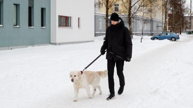 """KOERAOMANIKUD MARUS: """"Linnatänavad on nii ära soolatud, et koer hakkas jalutades niuksuma, nagu keegi oleks teda palgiga löönud, ja keeldus edasi liikumast!""""   Tarbija"""