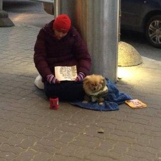 LOOMAKAITSJAD SÜÜDISTAVAD: kerjused teenivad raha uimastatud koerte abil!