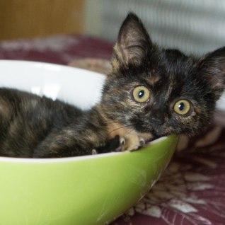 KOHUTAV JA SÜDAMETU: jõhkard pani kassipojad kilekotti, valas vee peale ja viskas prügikasti surema