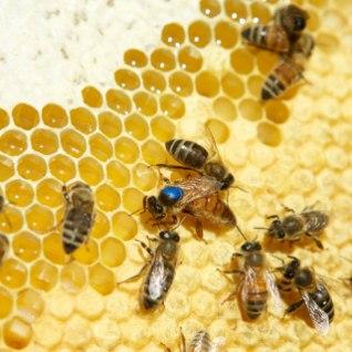 Appi, mesilane! Miks paljud nii väikseid tiivulisi kardavad?