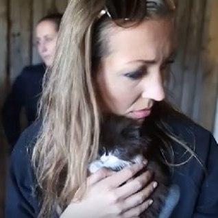 TV3 VIDEO l Kassikoloonia Haapsalu lähedal valmistab loomakaitsjatele muret