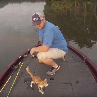 VIDEO   Kalamees päästis paadini ujunud kassipojad