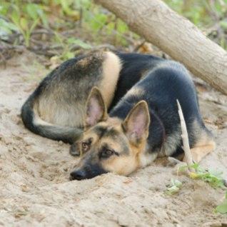 <font color=&quot;#d30008&quot;>ŠOKK! |</font> Salajased kaadrid armsa koerafilmi võtetelt paljastavad jõhkra loomapiinamise
