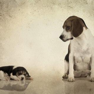 KAS EMA SÜDANT TUNNED SA: murtud jalaga ja valudes koer ei jäta enne, kui on oma kutsikad leidnud...