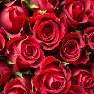 <font color=&quot;#d30008&quot;>Geniaalne!</font> See lihtne trikk hoiab roosid vaasis pikalt värskena