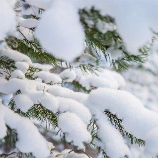 Töönädala teises pooles tuleb külma, Vabariigi aastapäevaks ehk lumi maas!