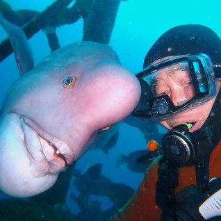 79-летний аквалангист ежедневно видится с лучшим другом. <font color=&quot;#d30008&quot;>Рыбой</font>